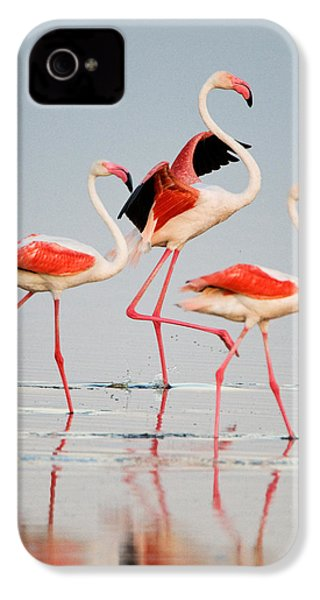 Greater Flamingos Phoenicopterus Roseus IPhone 4 / 4s Case by Panoramic Images