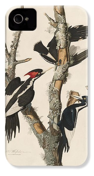 Ivory-billed Woodpecker IPhone 4 / 4s Case by John James Audubon