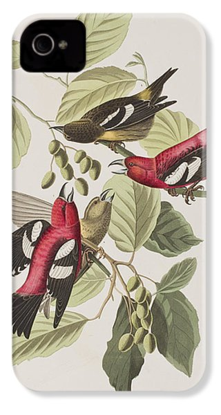 White-winged Crossbill IPhone 4 / 4s Case by John James Audubon
