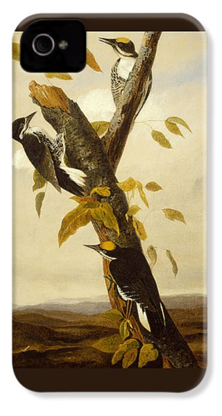 Woodpeckers IPhone 4 / 4s Case by John James Audubon