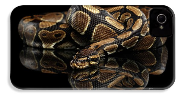 Ball Or Royal Python Snake On Isolated Black Background IPhone 4 / 4s Case by Sergey Taran