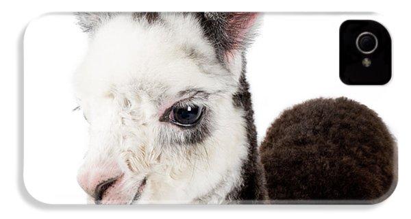 Adorable Baby Alpaca Cuteness IPhone 4 / 4s Case by TC Morgan