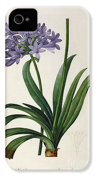 Agapanthus Umbrellatus IPhone 4 / 4s Case by Pierre Redoute