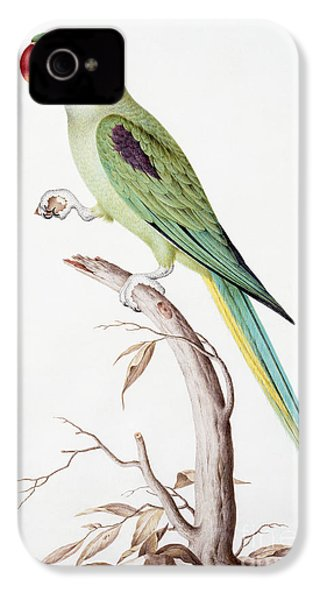 Alexandrine Parakeet IPhone 4 / 4s Case by Nicolas Robert