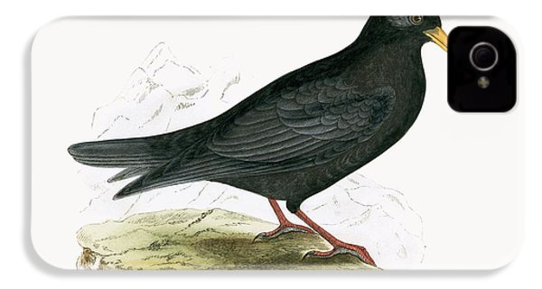 Alpine Chough IPhone 4 / 4s Case by English School