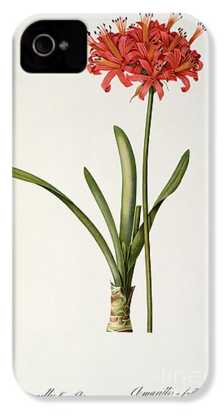 Amaryllis Curvifolia IPhone 4 / 4s Case by Pierre Redoute