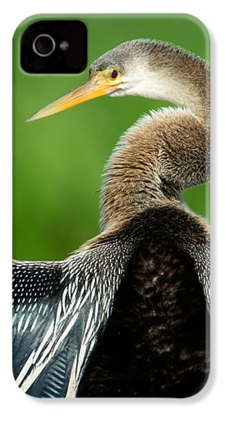 Anhinga Anhinga Anhinga, Pantanal IPhone 4 / 4s Case by Panoramic Images