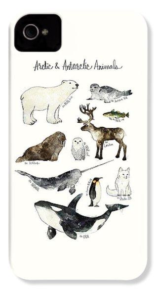 Arctic And Antarctic Animals IPhone 4 / 4s Case by Amy Hamilton