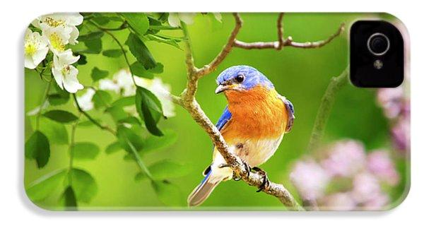 Beautiful Bluebird IPhone 4 / 4s Case by Christina Rollo