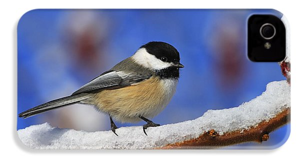 Black-capped Chickadee In Sumac IPhone 4 / 4s Case by Tony Beck