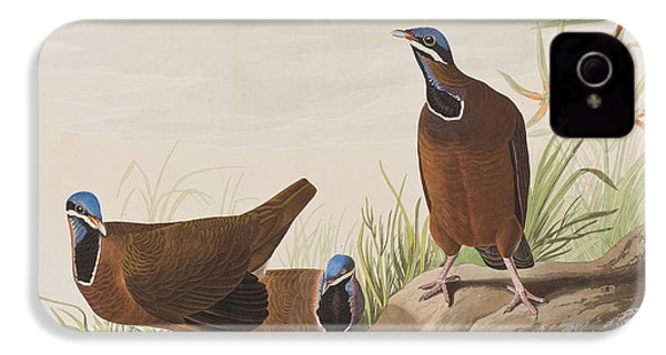 Blue Headed Pigeon IPhone 4 / 4s Case by John James Audubon