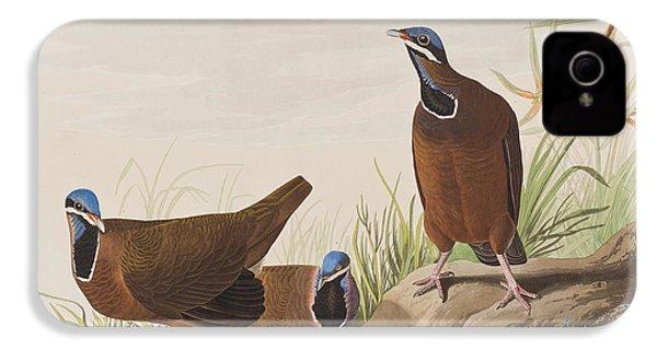 Blue Headed Pigeon IPhone 4 / 4s Case by John James Audubon
