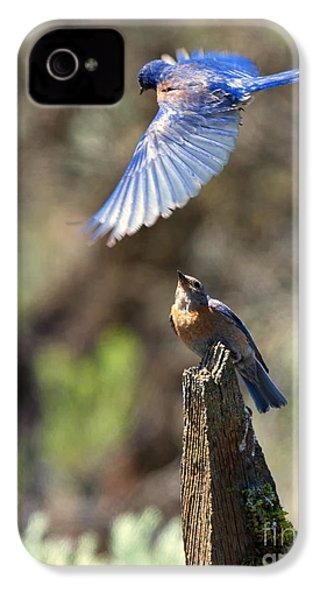 Bluebird Buzz IPhone 4 / 4s Case by Mike Dawson