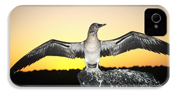 Booby At Sunset IPhone 4 / 4s Case by Dave Fleetham - Printscapes