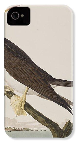 Booby Gannet   IPhone 4 / 4s Case by John James Audubon