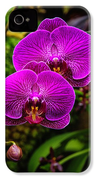 Bright Purple Orchids IPhone 4 / 4s Case by Garry Gay