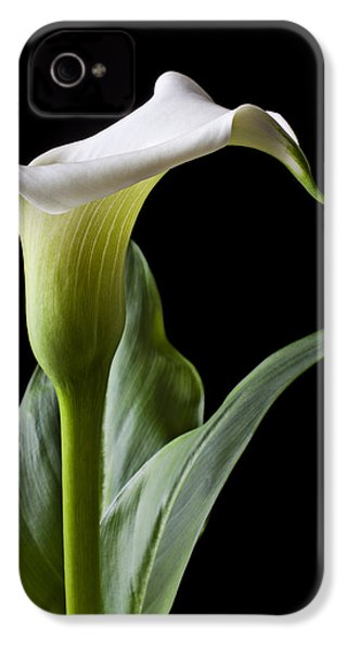 Calla Lily With Drip IPhone 4 / 4s Case by Garry Gay