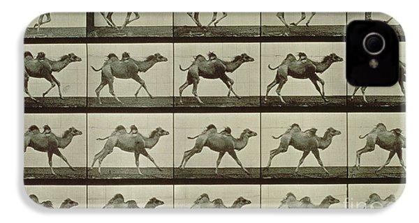 Camel IPhone 4 / 4s Case by Eadweard Muybridge