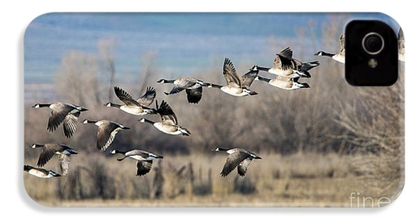 Canada  Geese Flock IPhone 4 / 4s Case by Mike Dawson