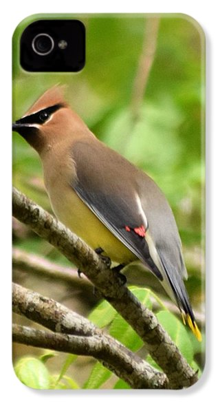 Cedar Wax Wing 1 IPhone 4 / 4s Case by Sheri McLeroy