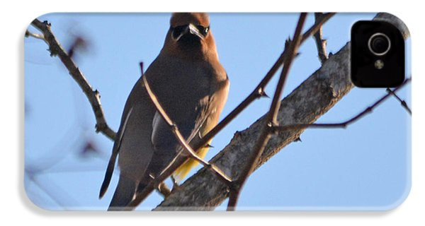 Cedar Wax Wing On The Lookout IPhone 4 / 4s Case by Barbara Dalton