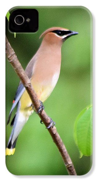 Cedar Wax Wing Profile IPhone 4 / 4s Case by Sheri McLeroy