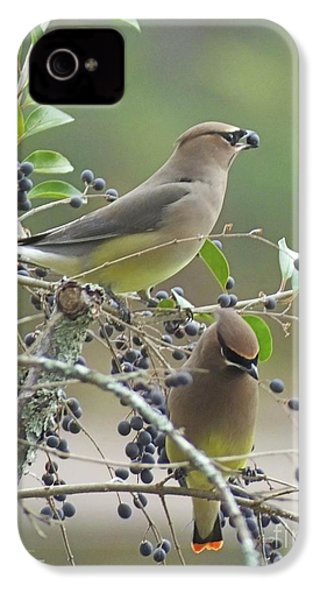 Cedar Wax Wings IPhone 4 / 4s Case by Lizi Beard-Ward