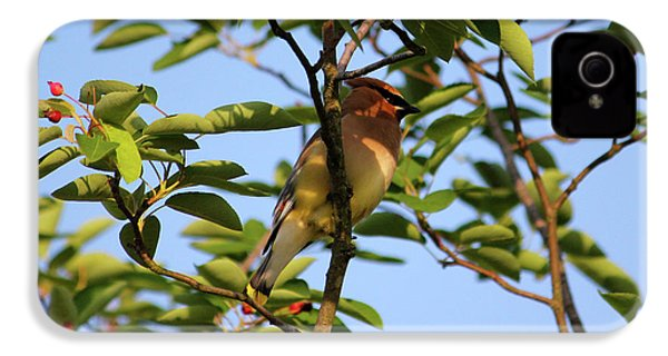 Cedar Waxwing IPhone 4 / 4s Case by Mark A Brown