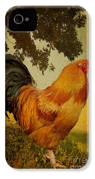 Chanticleer IPhone 4 / 4s Case by Lois Bryan