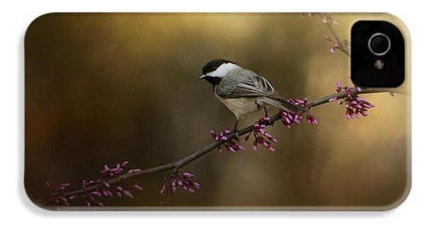 Chickadee In The Golden Light IPhone 4 / 4s Case by Jai Johnson
