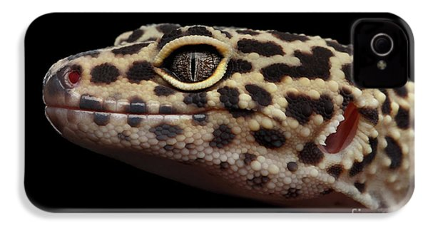 Close-up Leopard Gecko Eublepharis Macularius Isolated On Black Background IPhone 4 / 4s Case by Sergey Taran