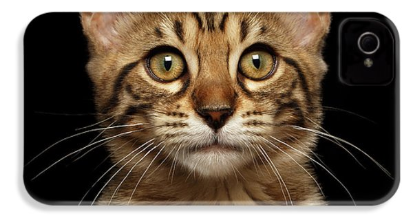 Closeup Portrait Of Bengal Kitty Isolated Black Background IPhone 4 / 4s Case by Sergey Taran