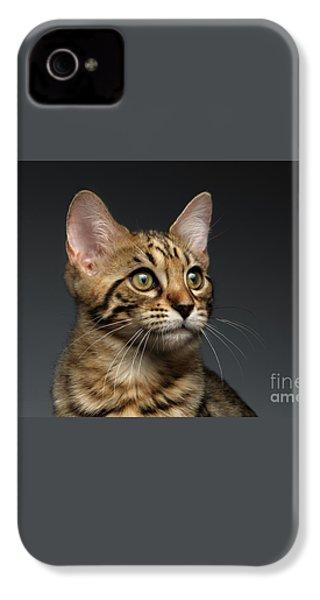 Closeup Portrait Of Bengal Male Kitty On Dark Background IPhone 4 / 4s Case by Sergey Taran