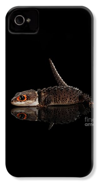 Closeup Red-eyed Crocodile Skink, Tribolonotus Gracilis, Isolated On Black Background IPhone 4 / 4s Case by Sergey Taran