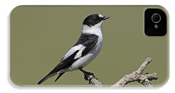 Collared Flycatcher IPhone 4 / 4s Case by Richard Brooks/FLPA