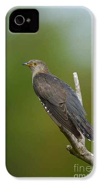 Common Cuckoo IPhone 4 / 4s Case by Steen Drozd Lund