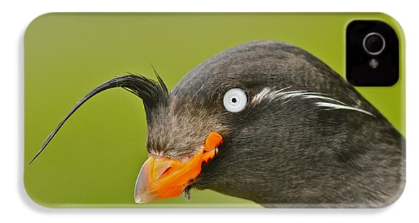 Crested Auklet IPhone 4 / 4s Case by Desmond Dugan/FLPA