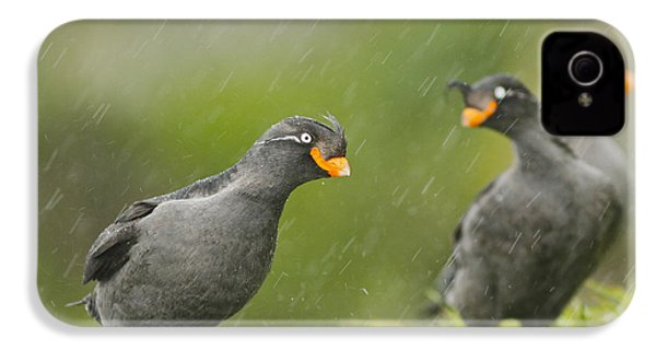 Crested Auklets IPhone 4 / 4s Case by Desmond Dugan/FLPA