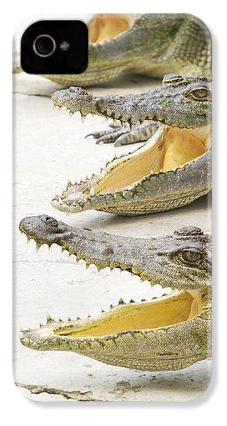 Crocodile Choir IPhone 4 / 4s Case by Jorgo Photography - Wall Art Gallery