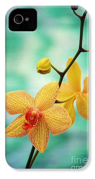 Dendrobium IPhone 4 / 4s Case by Allan Seiden - Printscapes