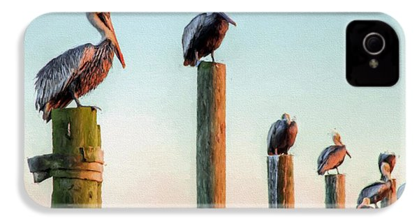 Destin Pelicans-the Peanut Gallery IPhone 4 / 4s Case by JC Findley