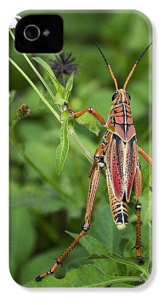 Eastern Lubber Grasshopper  IPhone 4 / 4s Case by Saija  Lehtonen