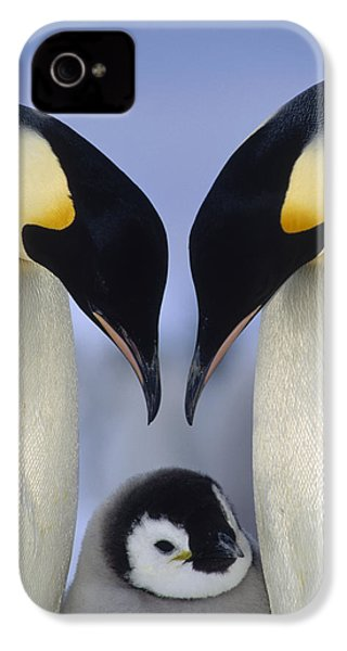 Emperor Penguin Family IPhone 4 / 4s Case by Tui De Roy