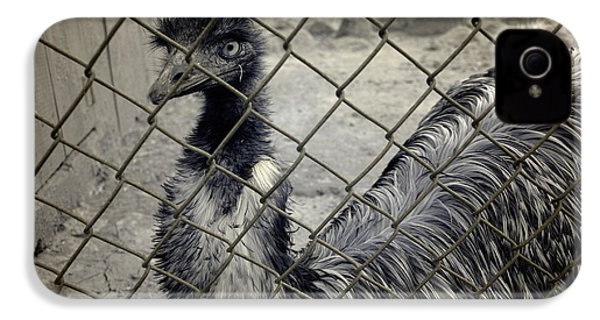 Emu At The Zoo IPhone 4 / 4s Case by Luke Moore