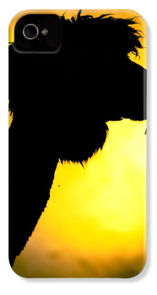 Endless Alpaca IPhone 4 / 4s Case by TC Morgan