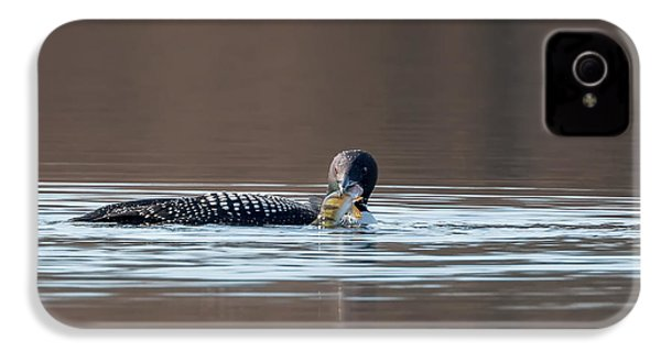 Feeding Common Loon IPhone 4 / 4s Case by Bill Wakeley