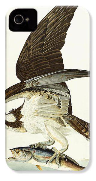 Fish Hawk IPhone 4 / 4s Case by John James Audubon