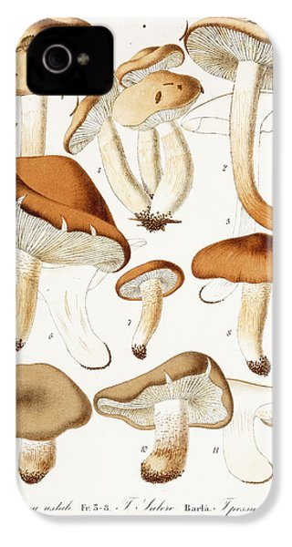 Fungi IPhone 4 / 4s Case by Jean-Baptiste Barla