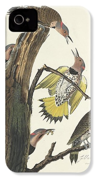 Gold-winged Woodpecker IPhone 4 / 4s Case by John James Audubon