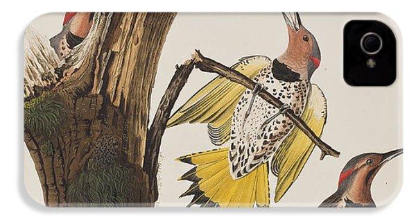 Golden-winged Woodpecker IPhone 4 / 4s Case by John James Audubon